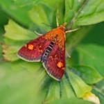 2012 08 Moth 021